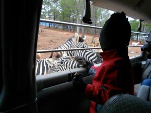 my nephew feeding a zebra